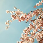 april-11-prunus__48-nocal-1920x1200